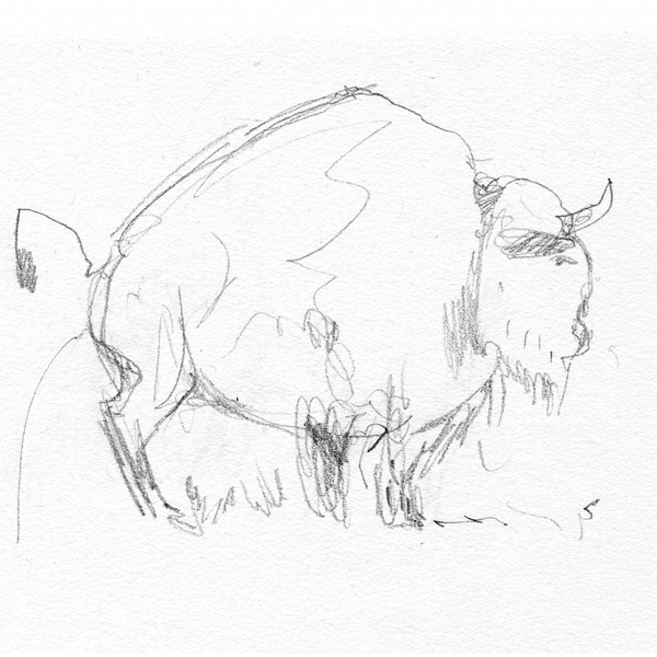 tiere_buffalo_1