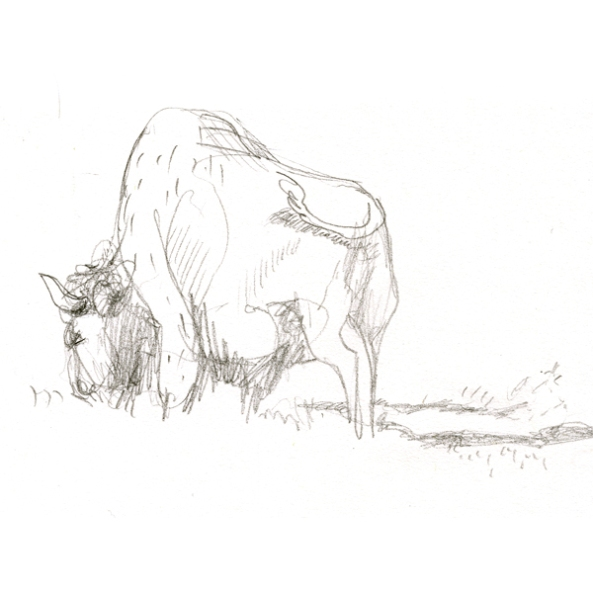 tiere_buffalo_2