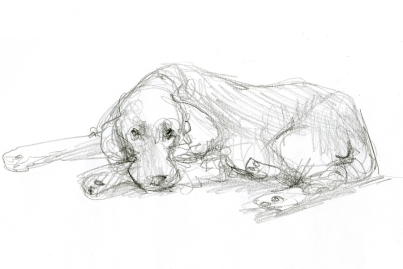 klick for more animal drawings