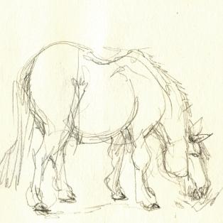 tiere_pony_1