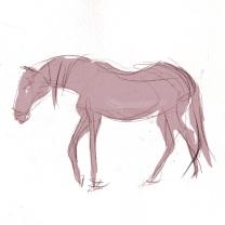 tiere_pony_2