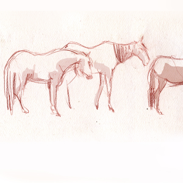 tiere_pony_3